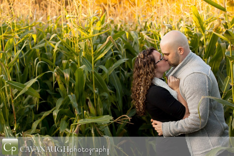 POTD_engagement_cornfield_mapleside_01-08-13